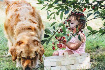 Собака для детей