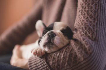 сон беременность