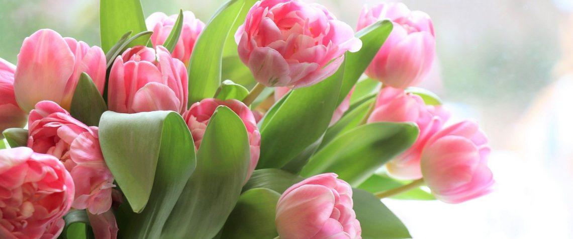 тюльпаны и 8 марта