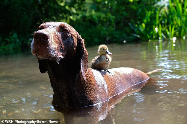 утенок и собака фото 3